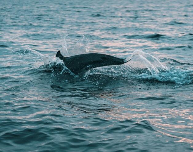 Lo slancio del delfino / The dolphin's momentum